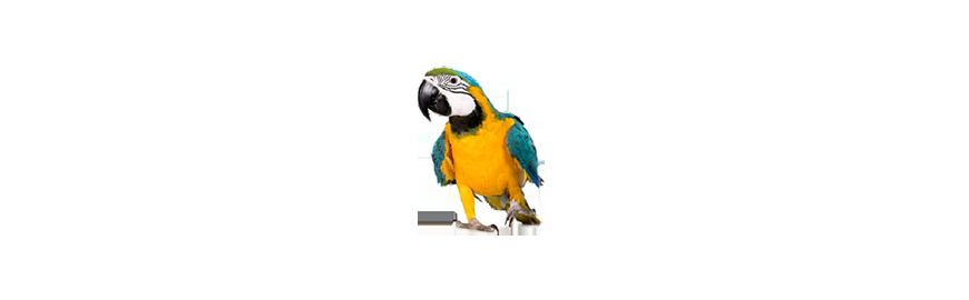 Karmy dla ptaków egzotycznych