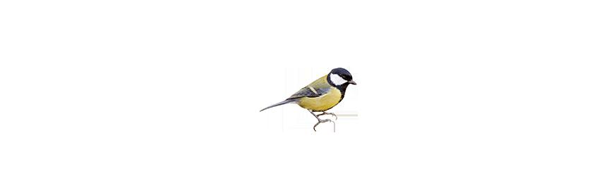 Karmy dla dzikich ptaków