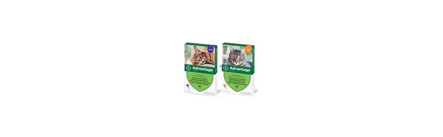 Obroże na pchły i kleszcze dla kota